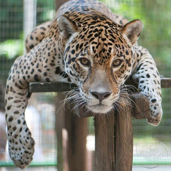 tropical-manaus-zoologico-onc3a7a.jpg