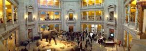 A rotunda do Museu Nacional de História Natural, em Washington, EUA