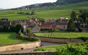 Vinhedos, Pommard, Borgonha, França