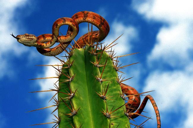 Serpente sobre um cactus. Foto de André Pessoa.