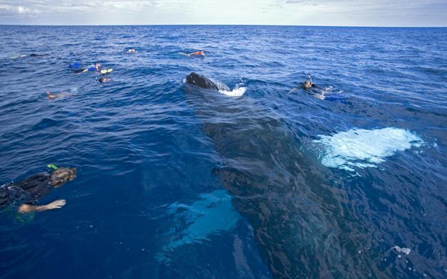 Entre os meses de janeiro e março, milhares de baleias jubartes podem ser vistas no azul da costa de Samaná.