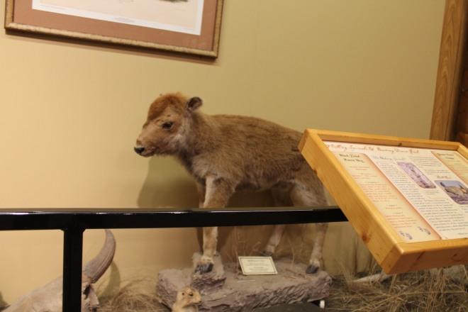 Interior do National Buffalo Museusm - EUA