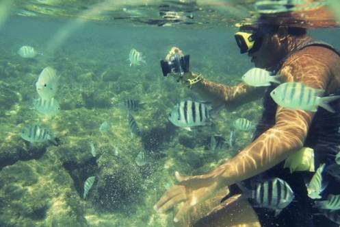 As piscinas naturais da Costa dos Corais são verdadeiros aquários repletos de fauna marinha