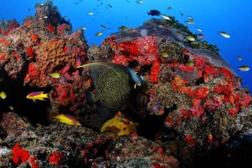 Paisagem submarina na Costa dos Corais