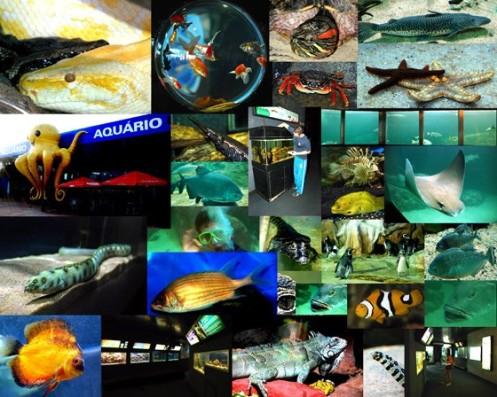 Imagens do Aquário Aqua Mundo, no Guarujá