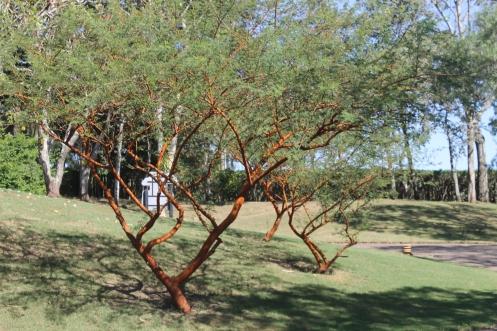 Vegetação típica de Itirapina.JPG