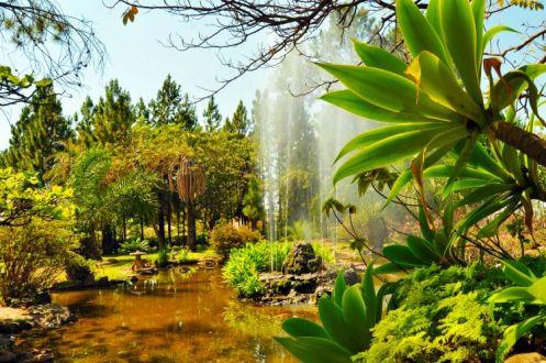 Jardim Japonês 1
