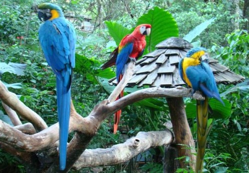 O Parque das Aves é um dos recantos mais visitados