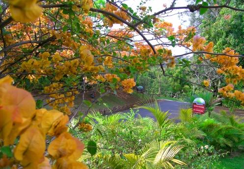 Natureza privilegiada no Colina Verda.jpg