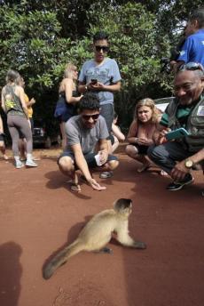 Macaco-prego na Fazenda Água Branca - Foto: Edson Rodrigues/Trade Turístico