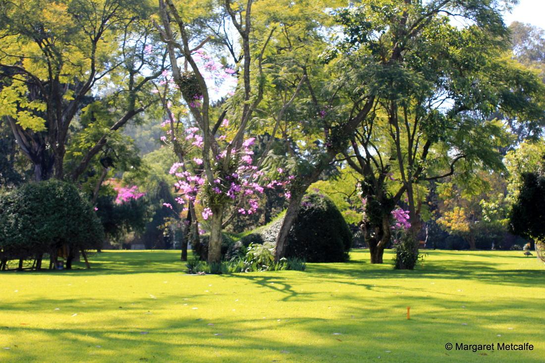 Jardim do Museu Dolores Olmedo.jpg