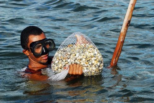 Coleta de futos do mar em mangue de Maceió - Foto André  Pessoa.jpg