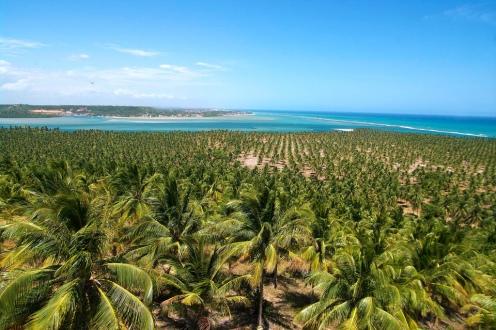 Praia do Gunga  e Barra de São Miguel - Foto Otávio Nogueira.jpg
