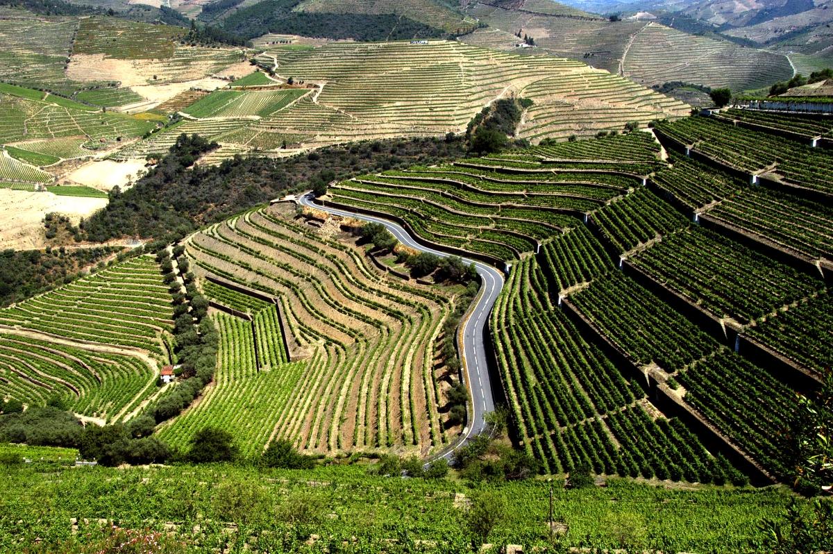Douro - produção de uvas.jpg