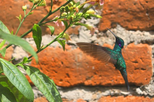 fauna-equatoriana-foto-site-descubra-quito