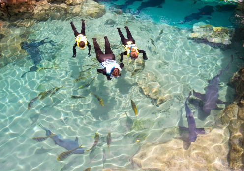 Nado com tubarões2
