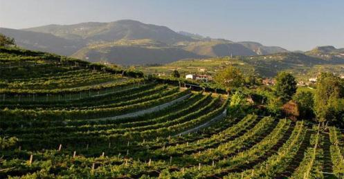 valpolicella - Foto Site Ifatto Quotidiano