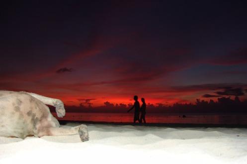 Beach Dog Drunk Jamaica Beer Sunset