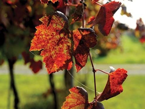 Tons do outono - Foto Gavioli Antica Cantina.jpg
