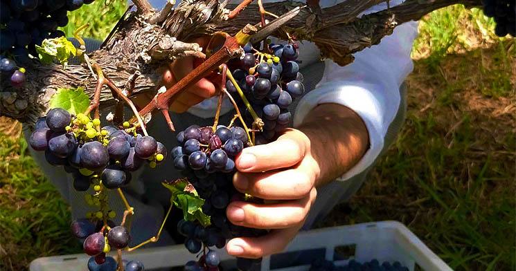 Produção de vinhos na Mantiqueira - Foto Senac