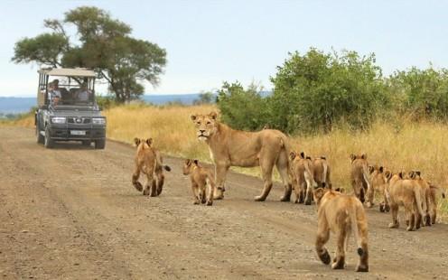 Parque Kruger - Leões.jpg