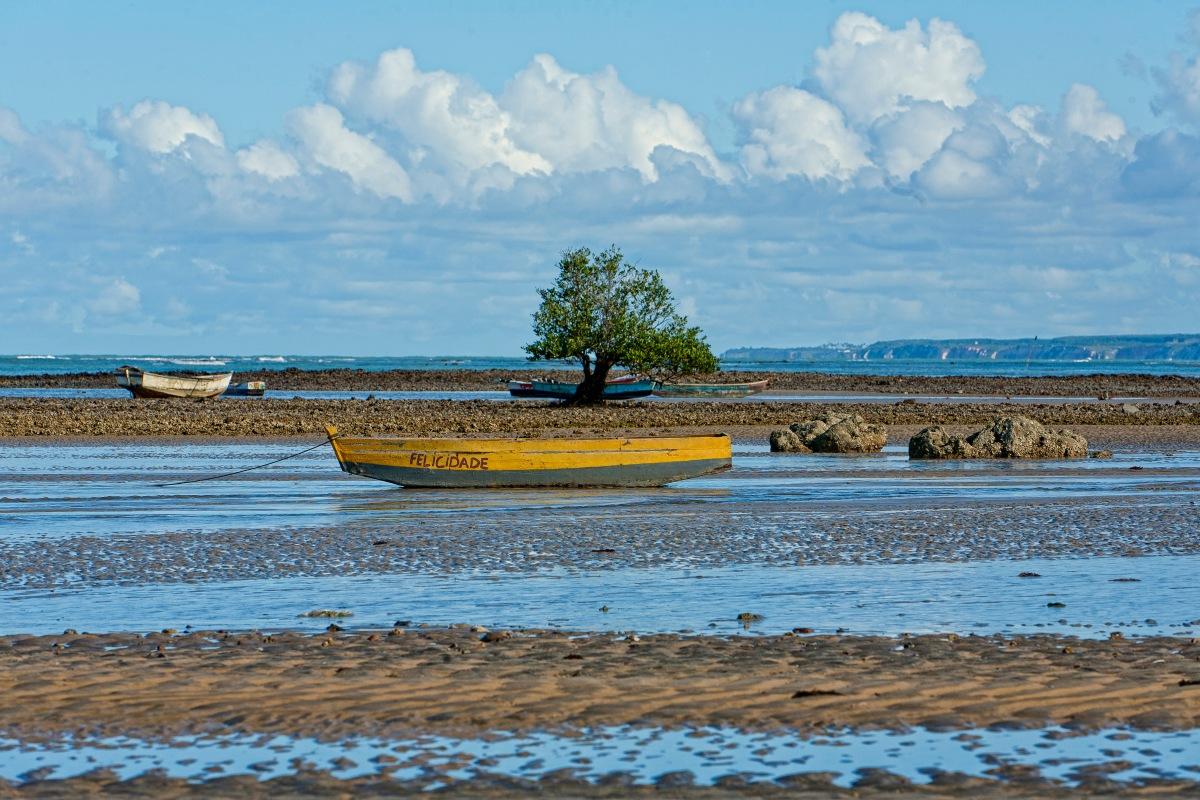Árvore na maré baixa em Cumuruxatiba - Bahia - Foto Wikimedia.jpg