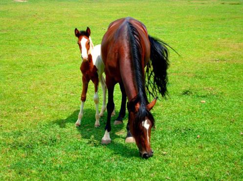 Cavalos - Atibainha