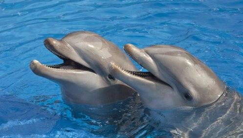 Golfinho nas Bahamas. Foto TravelBuenaVista.jpg
