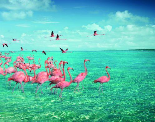 Parque Nacional de Inagua casa de uma das maiores populações de flamingos do mundo