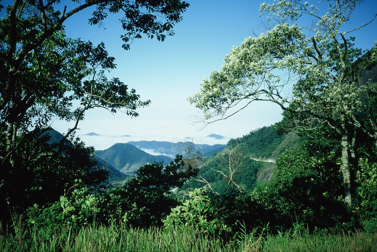Serra_da_Bocaina - Wikipedia