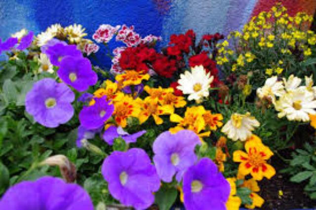 Santuário do Caraça - Flores Pxhere
