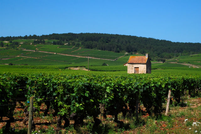 Borgonha - Pommard