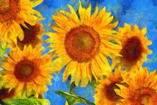 Sunflowers Os Girassóis de Van Gogh Foto The Art Box Academy