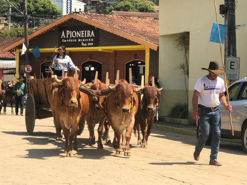 Congestionamento de bois no centro da cidade - Divulgação